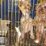 Italy_dogs_July16
